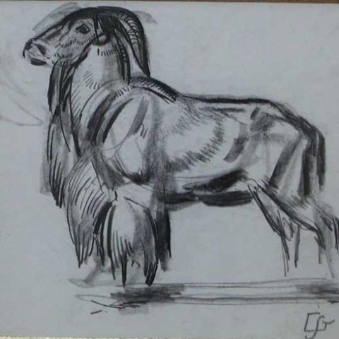 Mouflon. Vers 1925.